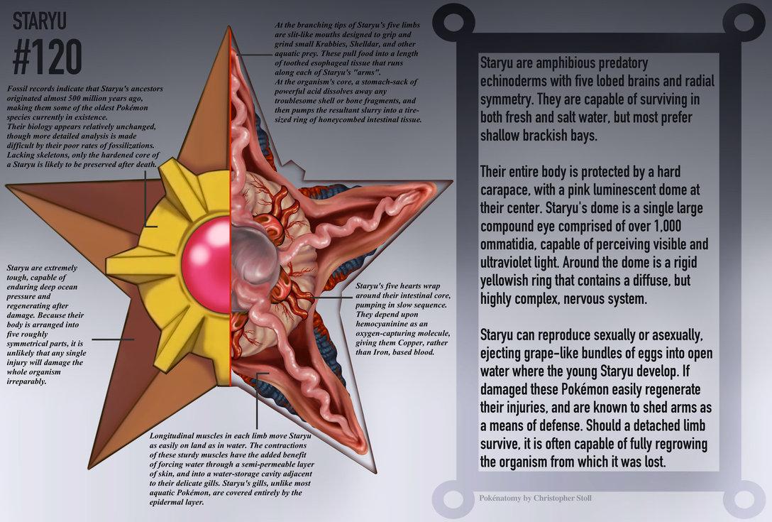 staryu anatomy pokedex -#main