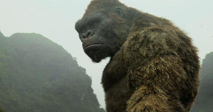 Une télé-série King Kong serait en développement!